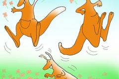 Kængurudans