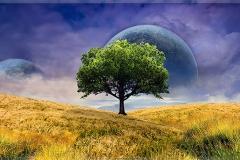 Oak in Space