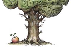 Hjernetræ
