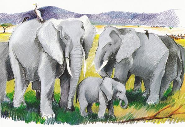 ill elefanter